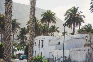 lanzarote#canarias#haria#palmtrees